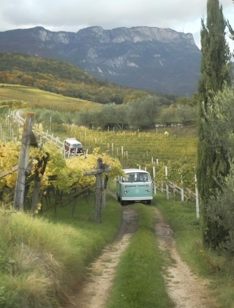 Grünes Auto zwischen Weinreben