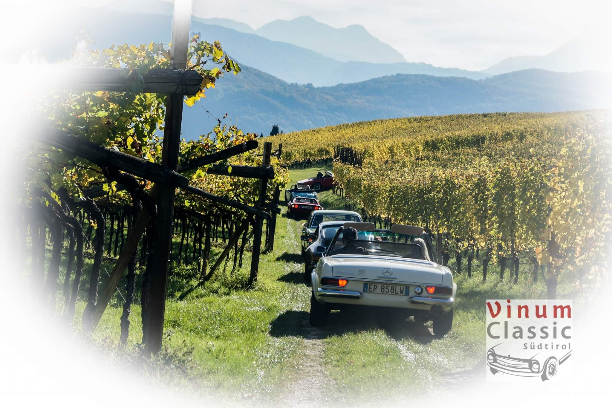 Berg mit Weinreben & Oldtimerautos
